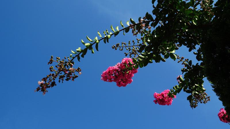 【旅游②寻梦】蓝天绿树红花