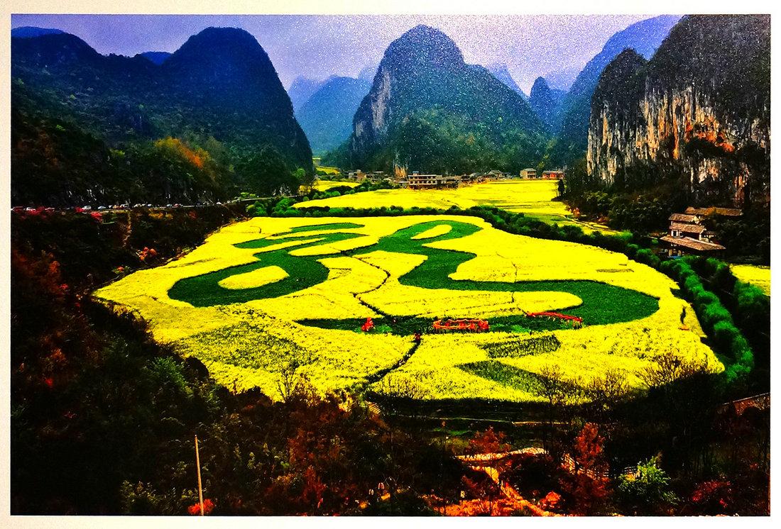 贵州省安顺龙宫风景区举办油菜花节,油菜花田里的舞龙队.