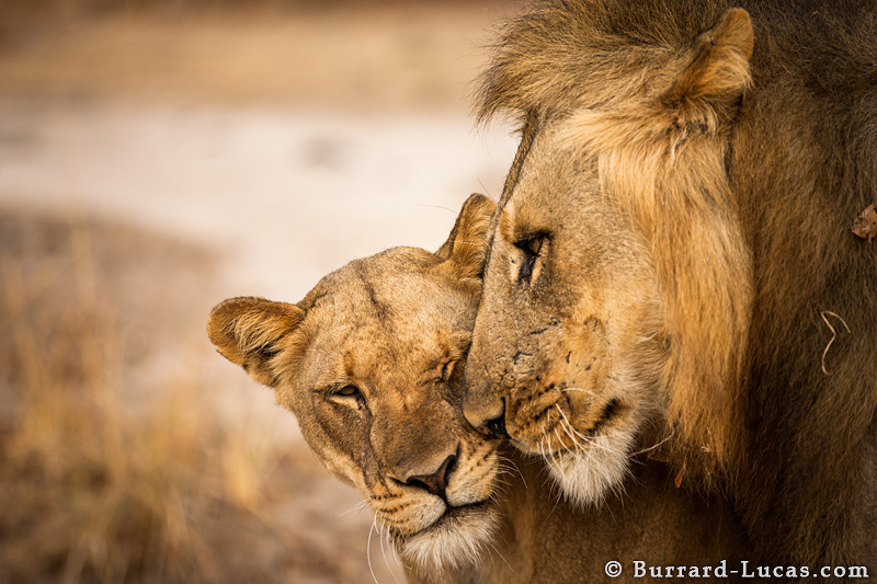 【转】绝世高手的野生动物摄影作品