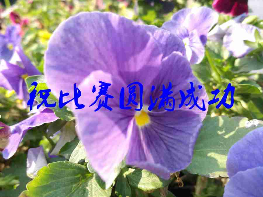 IMG_20180429_094300_副本.jpg