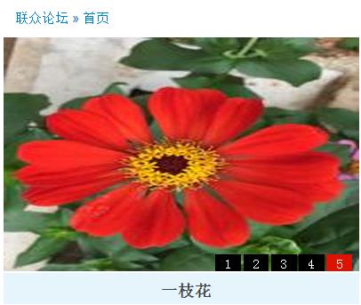 一枝花.png