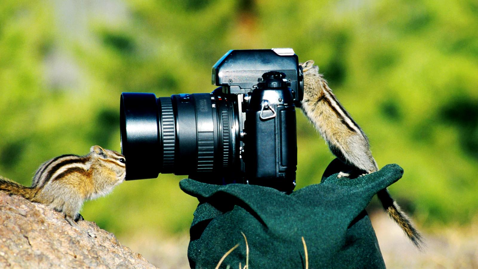 动物和照相机的亲密接触