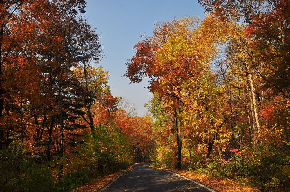 【原创音画】爱在秋天的童话