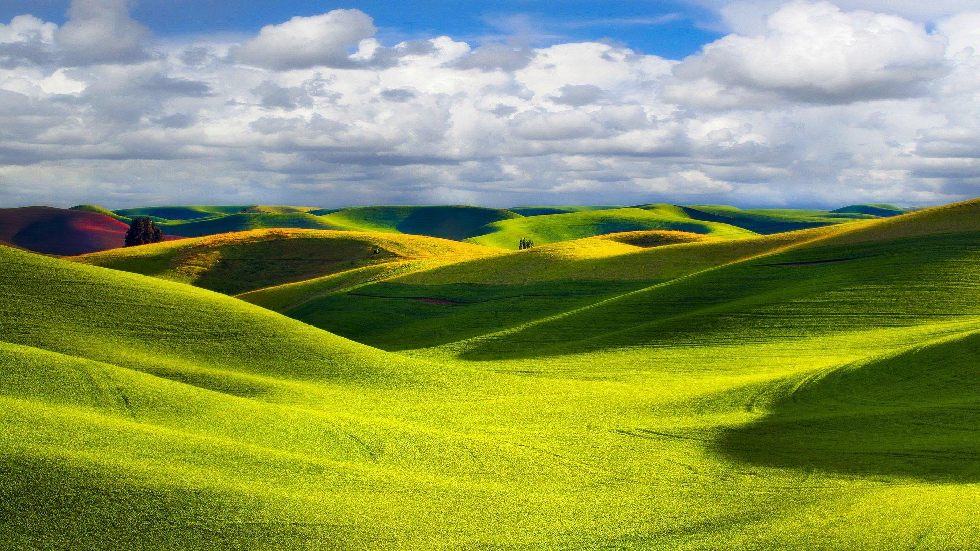 壁纸 草原 成片种植 风景 植物 种植基地 桌面 1920_1080