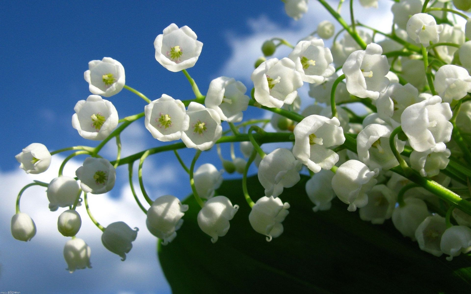 唯美好看的花朵壁纸图片