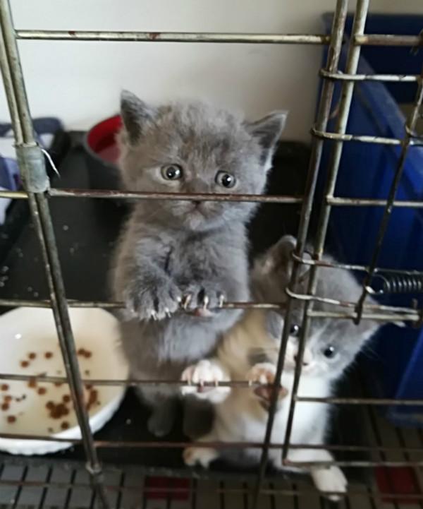 猫猫1_meitu_1.jpg